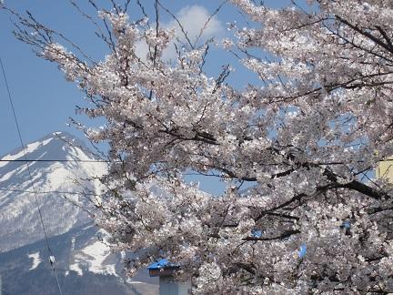 磐梯山と桜